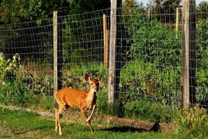 Metal Fence For Backyard