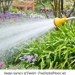 Watering Tips